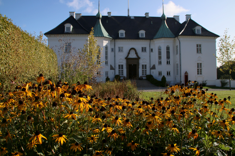 Рудбекия цветет на клумбах многолетников перед дворцом Марселисборг
