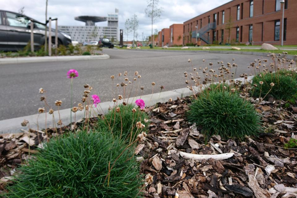 Парковка больничного городка