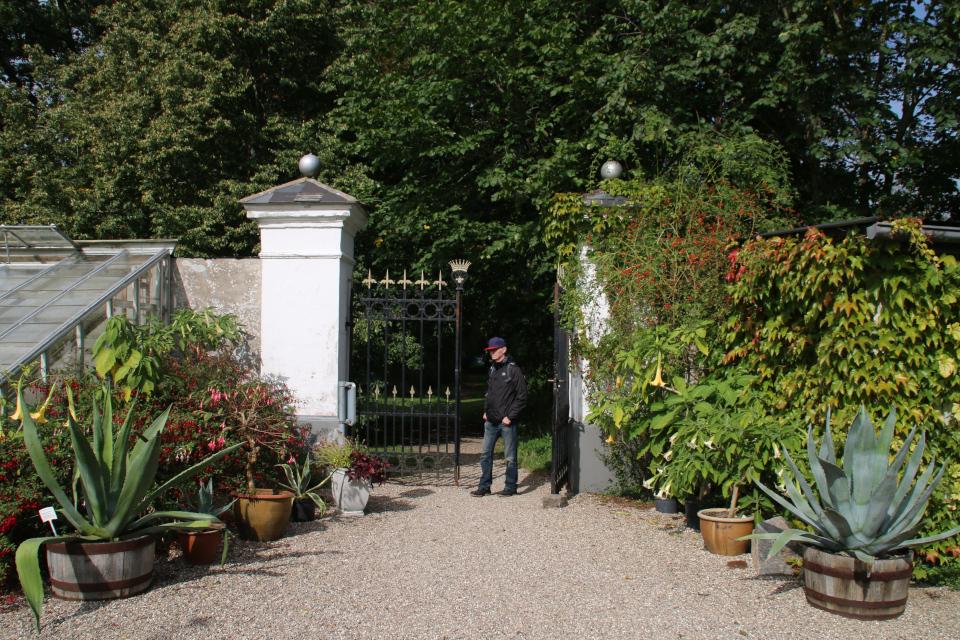 Липа на заднем фоне у входа в парк старинного замка Боллер