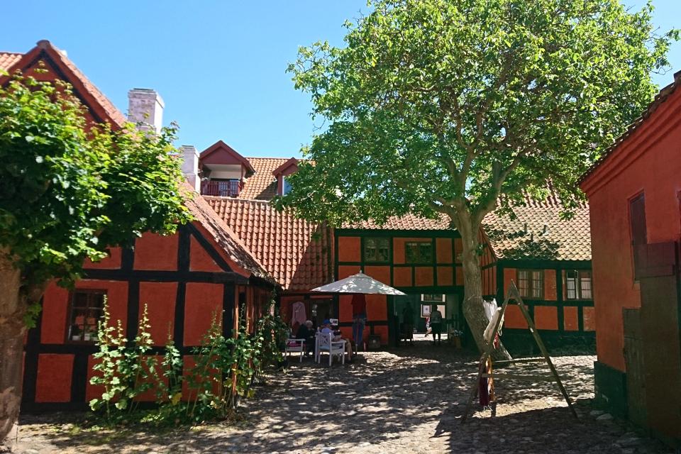Дерево грецкого ореха во дворе старой красильни, г. Эбельтофт / Ebeltoft, Дания