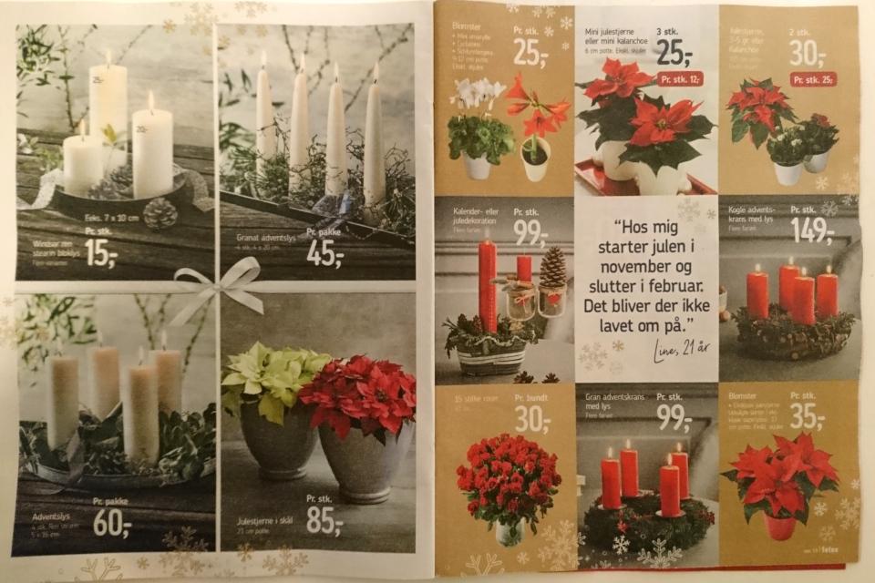 Реклама датского супермаркета с рождественскими растениями: пуансеттия, омела