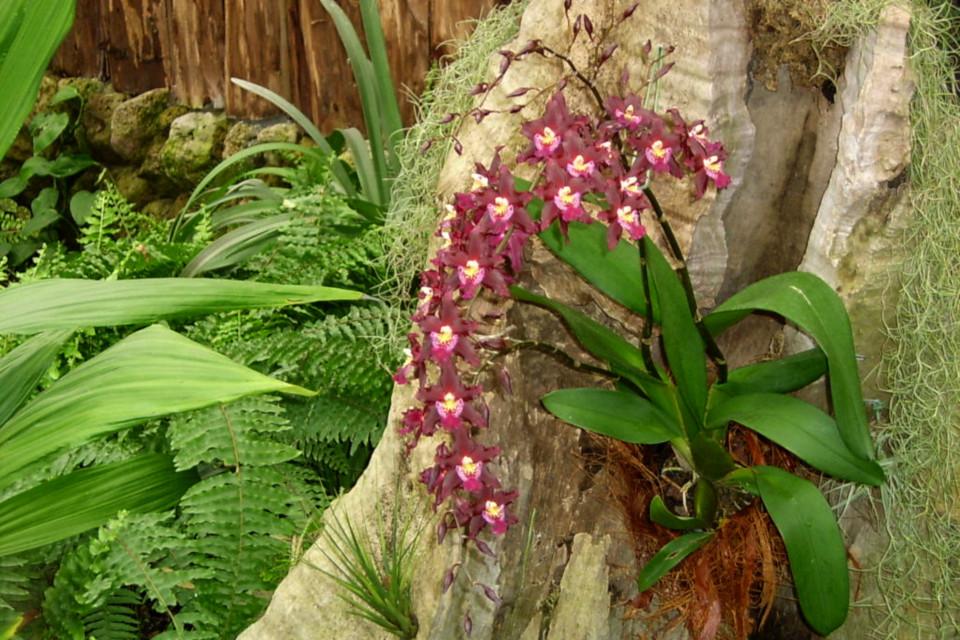 Цветущая орхидея на стволе дерева, парк Йесперхус (Jesperhus Feriepark)