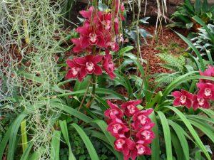 Орхидеи парка Йесперхус