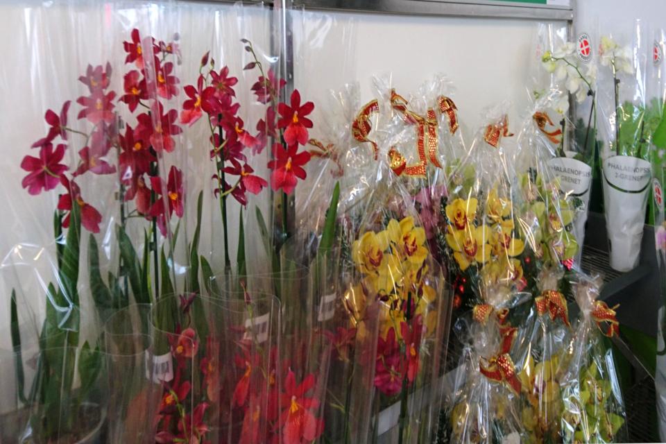 Орхидомания в Дании - в продаже орхидеи в горшках и в букетах