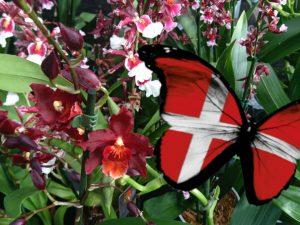 Орхидомания в Дании