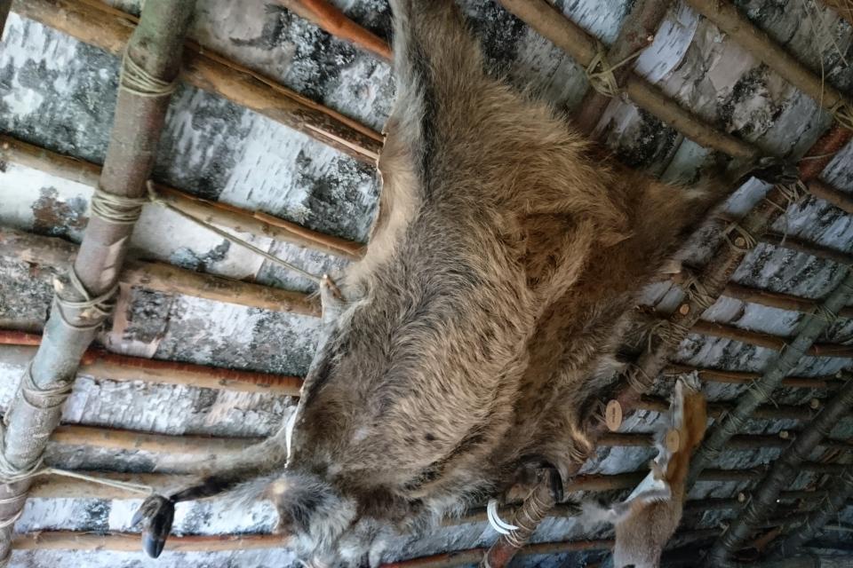 Шкуры кабана и лисицы в охотничьем шалаше Эртебёлле