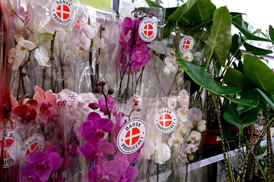 Фаленопсисы, выращенные в Дании (dansk produceret)
