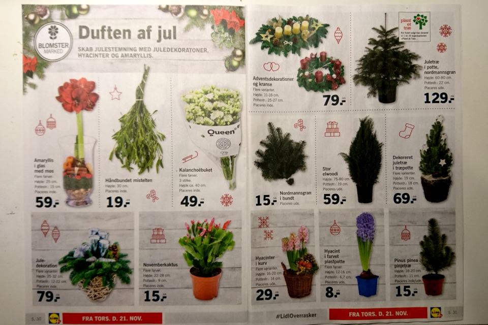 Реклама рождественских растений супермаркета Лидл в Дании. Фото 21 нояб. 2019