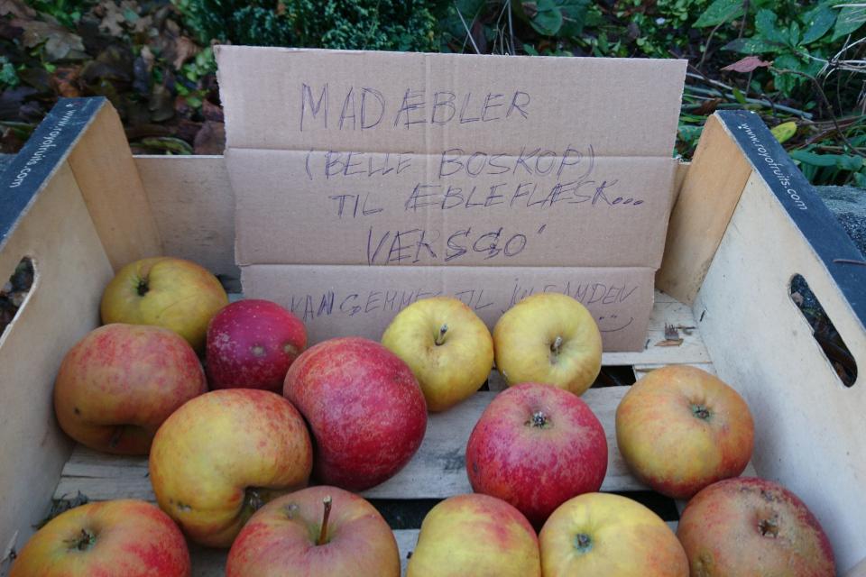 яблоки сорт Белле де Боскоп подходят для эблефлеск