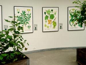 Ботанические детали