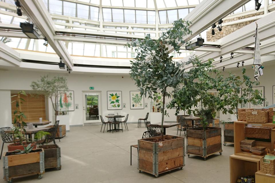 Контейнеры с эвкалиптами в выставочном зале с ботаническими иллюстрациями