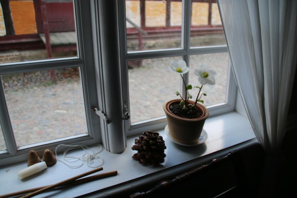Горшок с цветущим морозником украшает комнату старого дома
