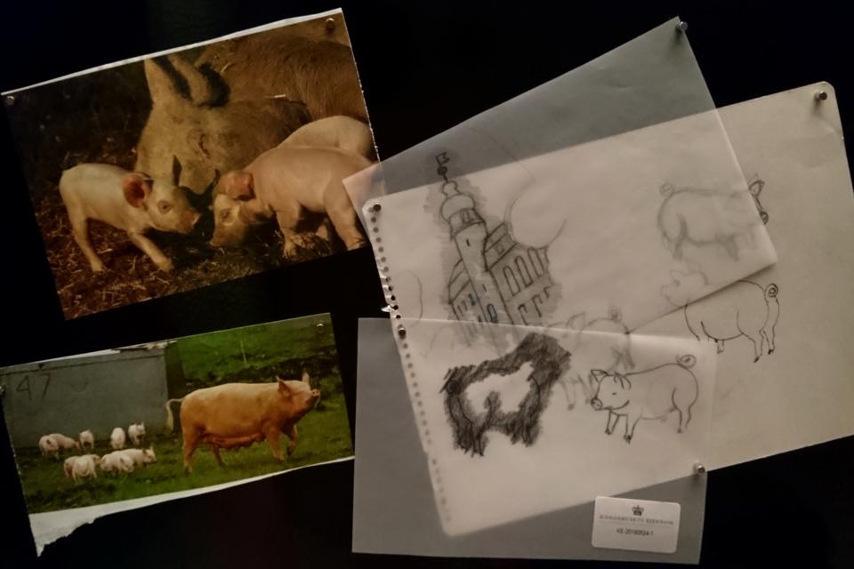 Зарисовки свиней, которые делала королева Маргрете II