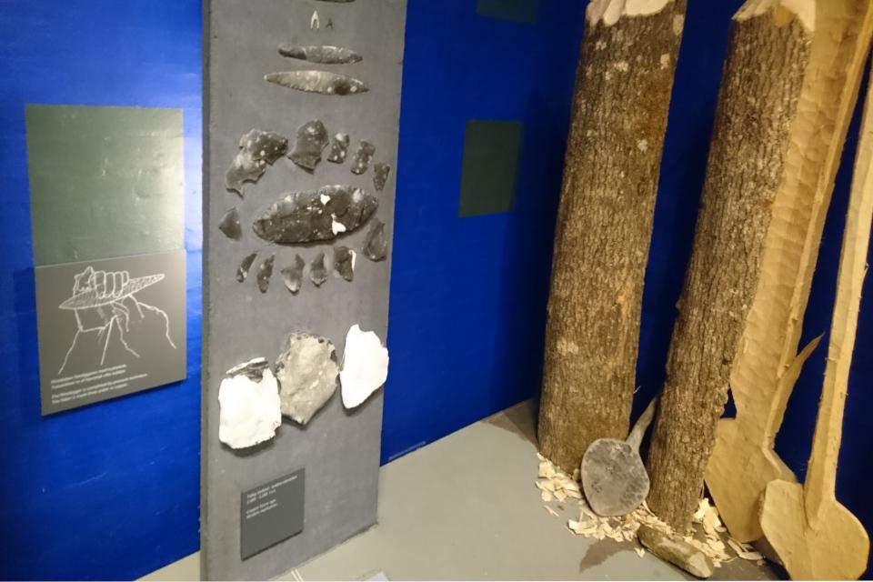 Орудия труда из камня и реконструкция весел культуры Эртебёлле
