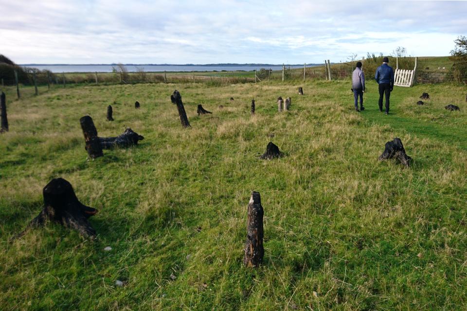 Обугленные остатки деревьев на участке земли