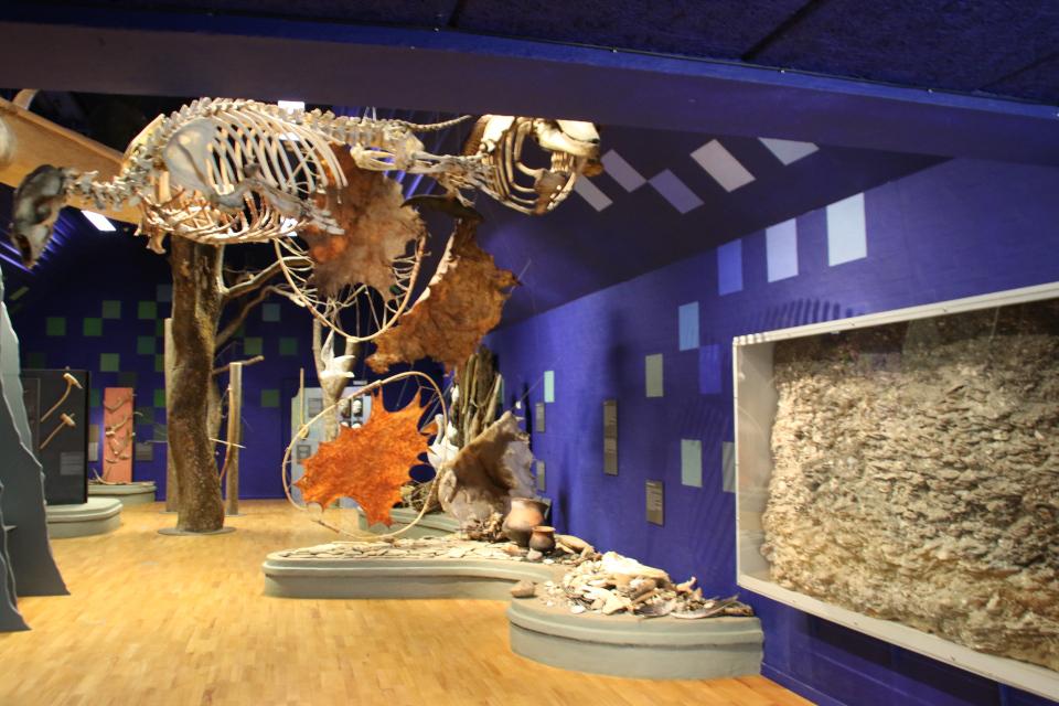 Экспозиция про охоту во времена культуры Эртебёлле в музее каменного века