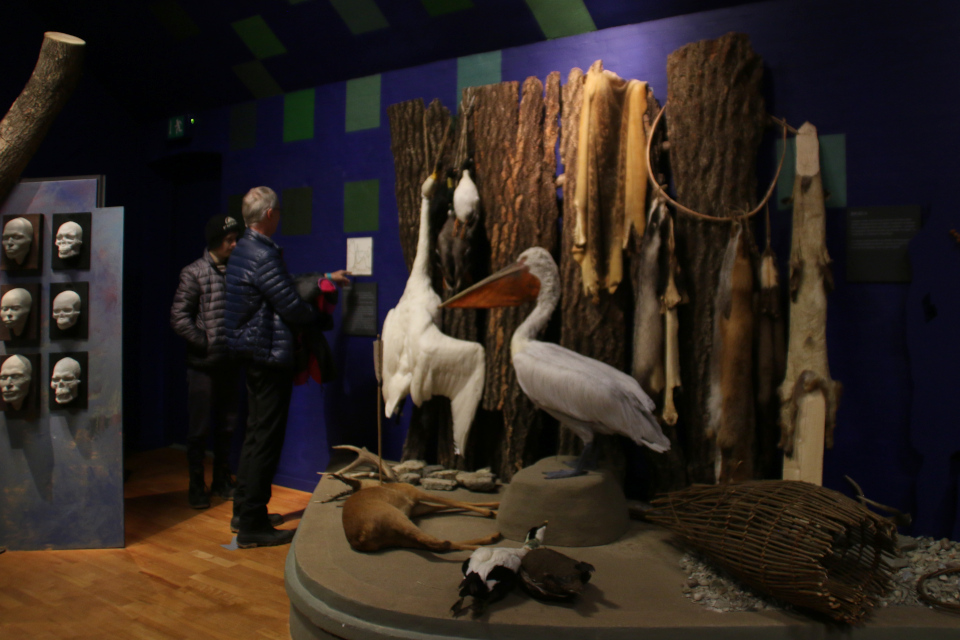 Примеры охотничьей добычи людей культуры Эртебёлле - утки, олень, пеликан