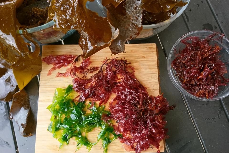 делессерия кровяно-красная (Delesseria sanguinea) и морской салат (Ulva lactuca)