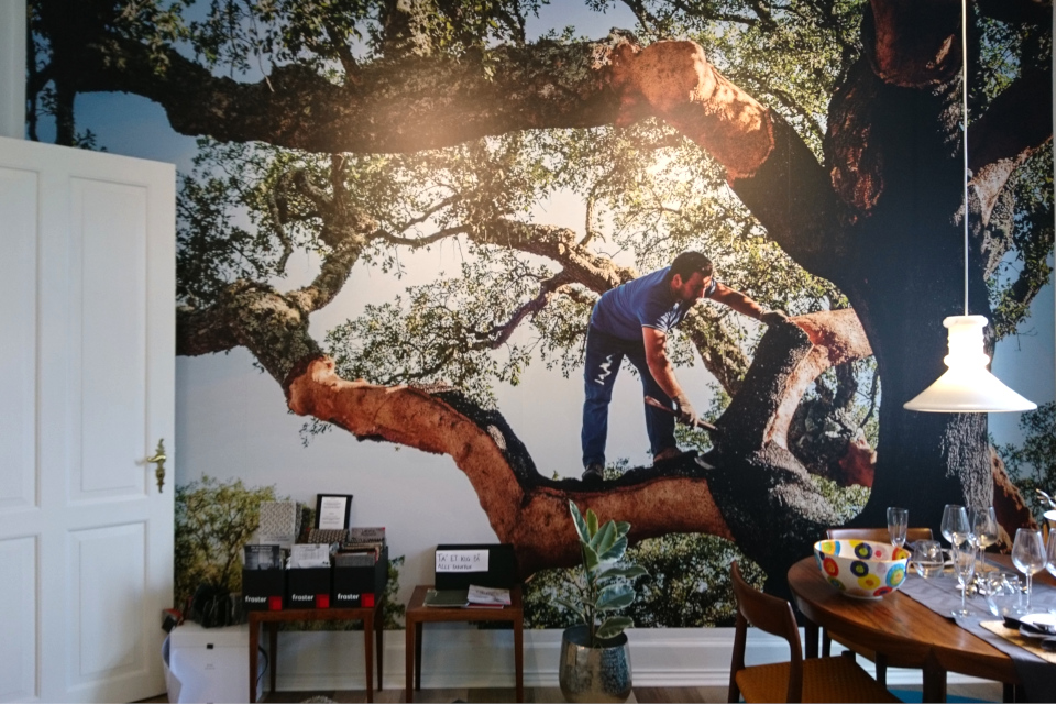 Дуб пробковый -/ Quercus suber