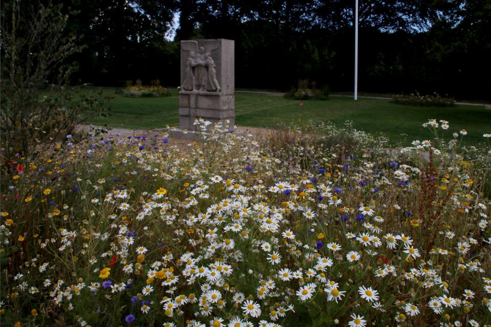 Ромашки и другие растения дикой флоры украшают парк воссоединения