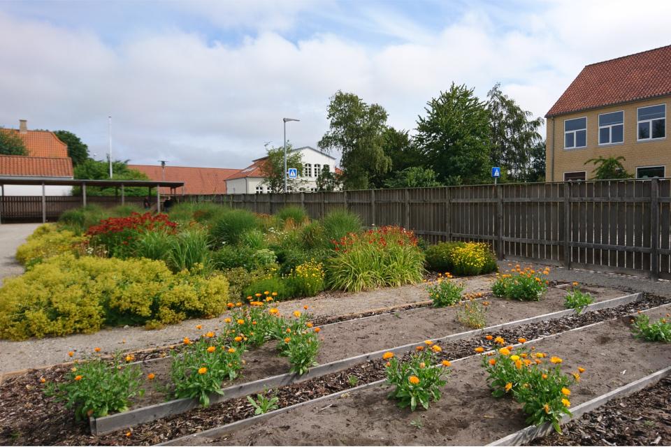 Грядки с лекарственными растениями в саду Коменского