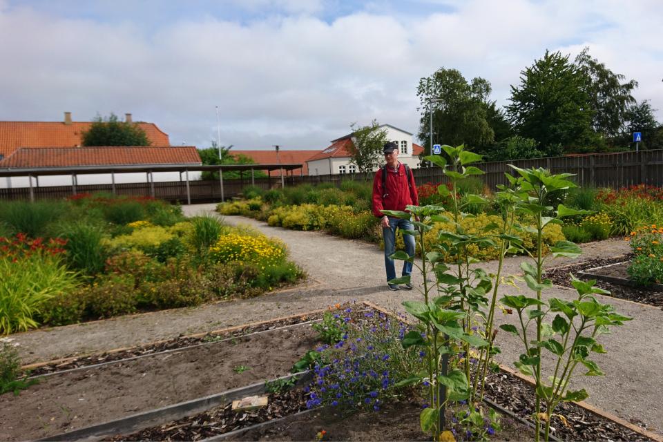 Школьные грядки в саду Коменского. Фото 17 июл. 2019, Кристиансфельд, Дания