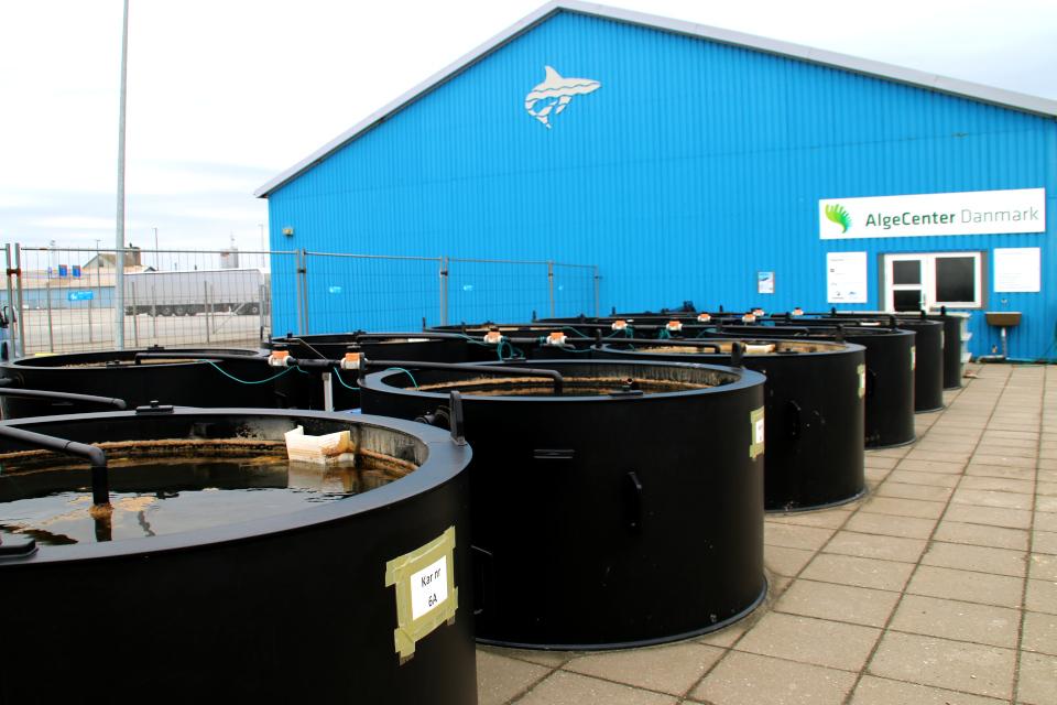 Научно исследовательский центр по изучению применения водорослей, Дания