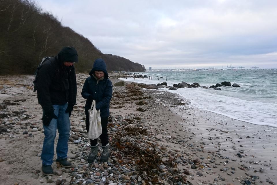 Во время шторма волны выносят на берег большое количество водорослей