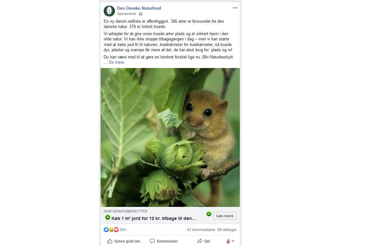 мышка орешниковая соня