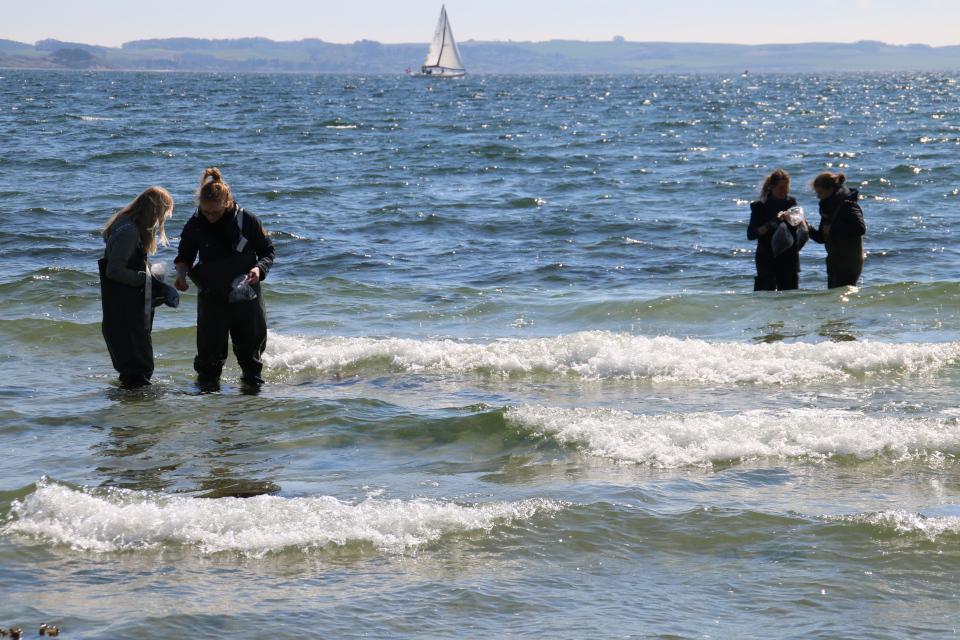Сбор водорослей на побережье моря. Фото 30 апр. 2017, г. Еуо / Egå, Дания