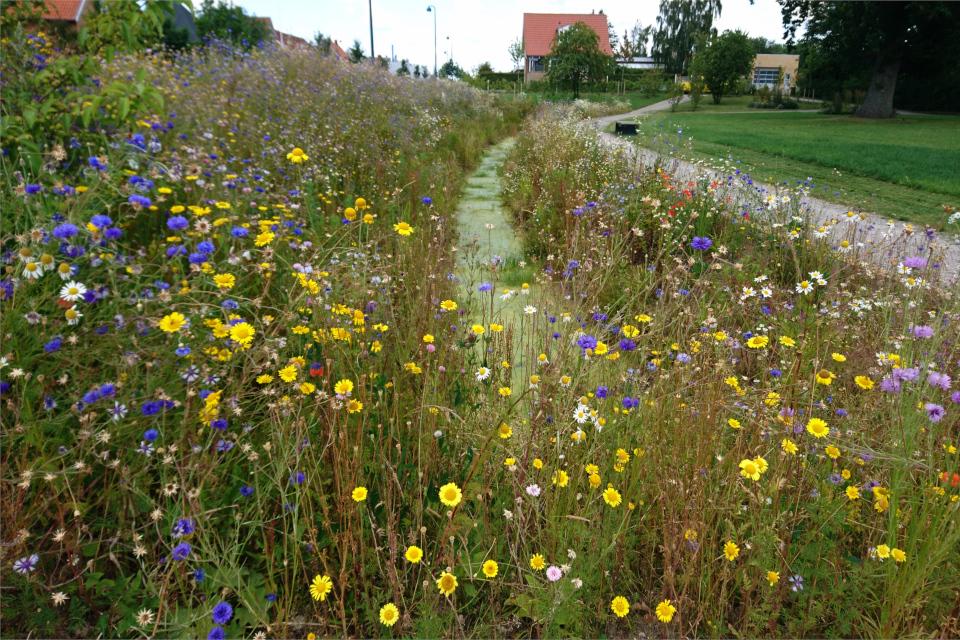 Парк (Genforeningspladsen) с дикими растениями флоры Дании