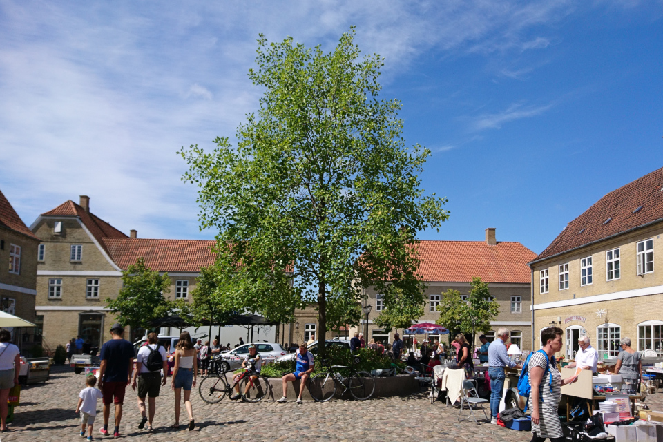 Лириодендрон посреди площади, Кристиансфельд