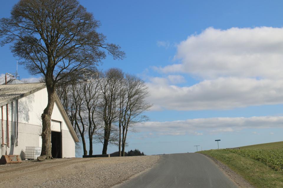 По дороге к холму Айер-Бавнехой. Фото 14 мар. 2020, г. Айер / Ejer, Дания