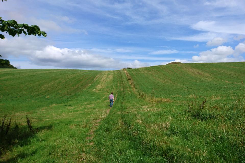 По пути к кургану через поле. Фото 9 авг. 2019, г. Ронде / Rønde, Дания