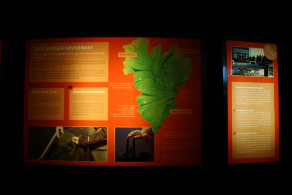 использование водорослей в производстве биогаза