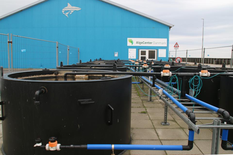 Установки для экспериментального выращивания разных видов водорослей, Дания