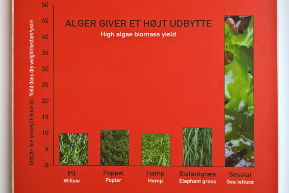 Сравнение продукции биомассы водорослей и других быстрорастущих растений