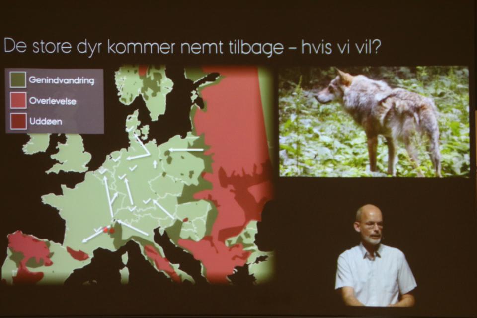 Волки в Европе, презентация биолога Йенс-Кристиан Свеннинг (Jens-Christian Svenning), Life stream из унуверситета Орхус, Дания. Фото 10 мар. 2020