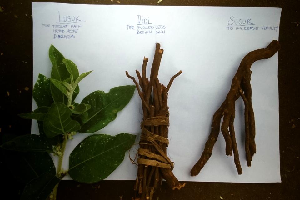 Лекарственые растения, Уганда: Lusuk, Didi, Sugur