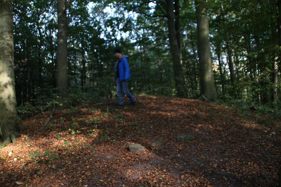 Курган в лесу Хёрхавен (Hørhaven)