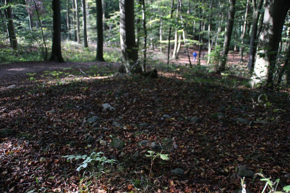 Вершина кургана, покрытая камнями в лесу Хёрхавен (Hørhaven)