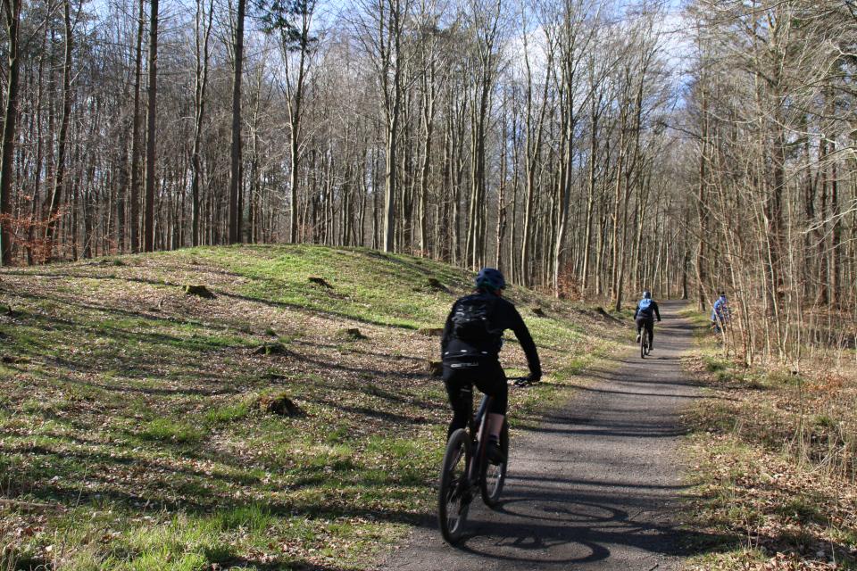 Велосипедная дорожка между курганами в лесу недалеко от ресторана Варна