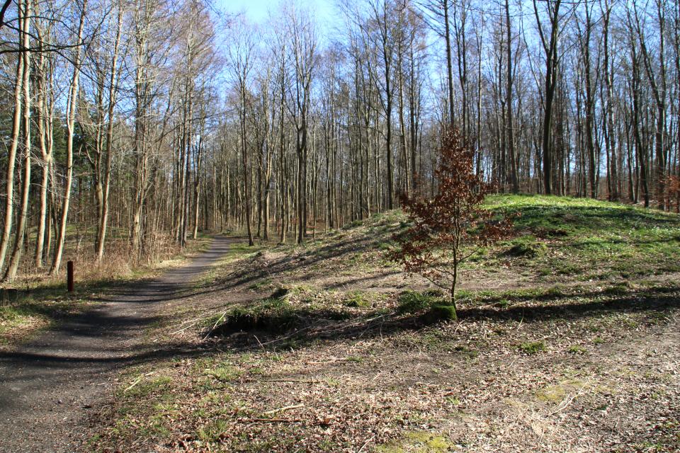 Курганы в лесу Марселисборг, расположенные недалеко от ресторана Варна