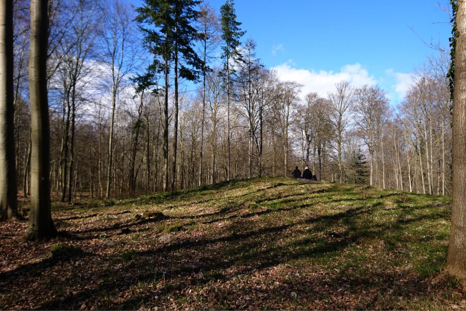 Курган в лесу недалеко от ресторана Варна