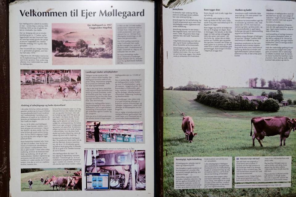 Информация про хозяйство Айер Мёллергорд (Ejer Møllergård) и коров