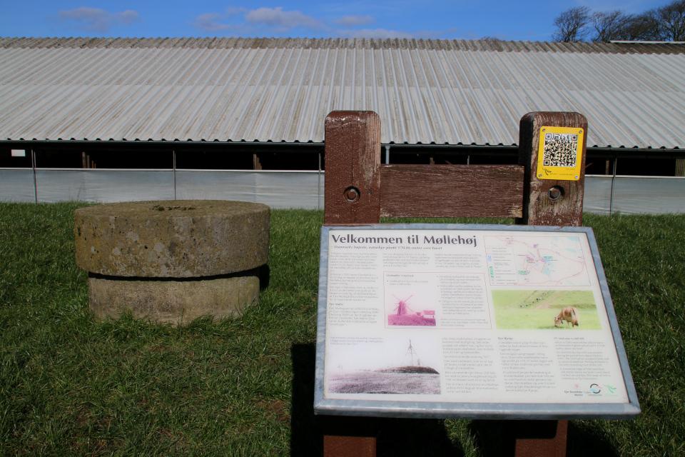 Информационный щит около жернова мельницы Мёллехой / Møllehøj, Дания