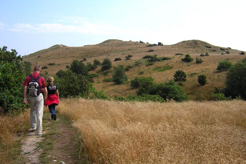 Холмы с тремя курганами (Trehøje) в Национальном парке Мольс Бьерг
