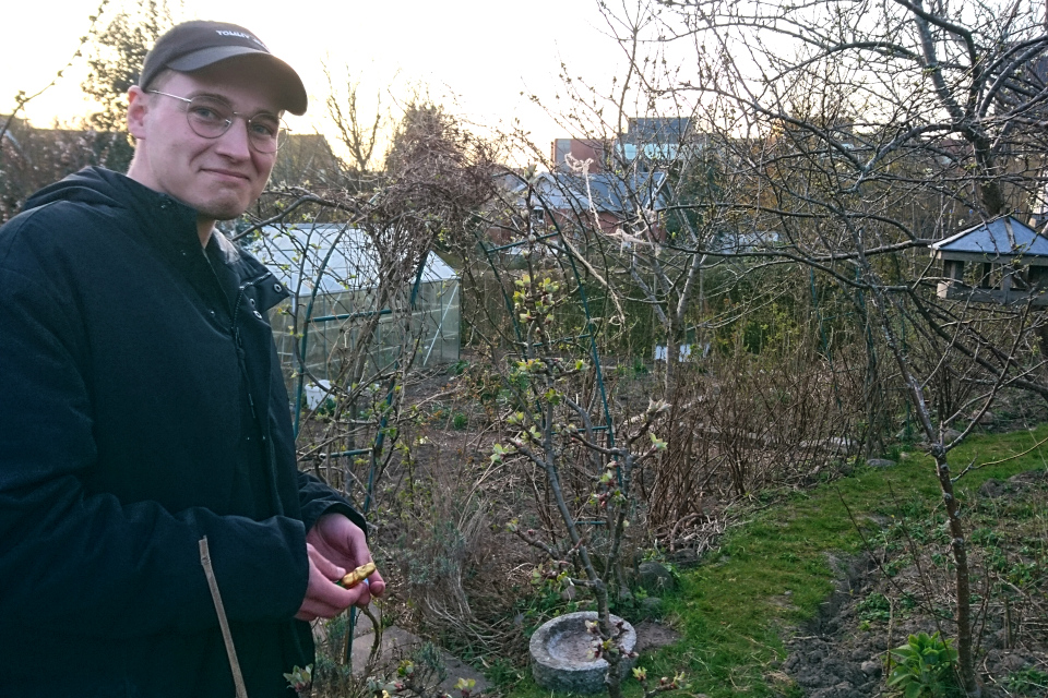 Густав прячет пасхальных зайцев и яйца. 9 апр. 2020, мой сад, Хойбьерг, Дания
