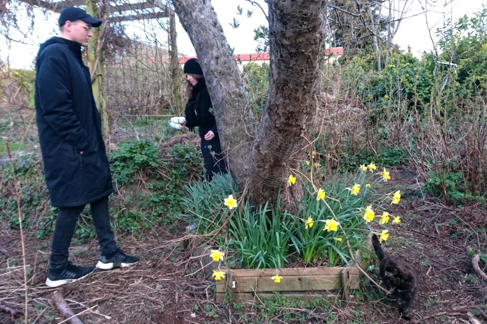 Катя прячет пасхальных зайцев и яйца. 9 апр. 2020, мой сад, Хойбьерг, Дания