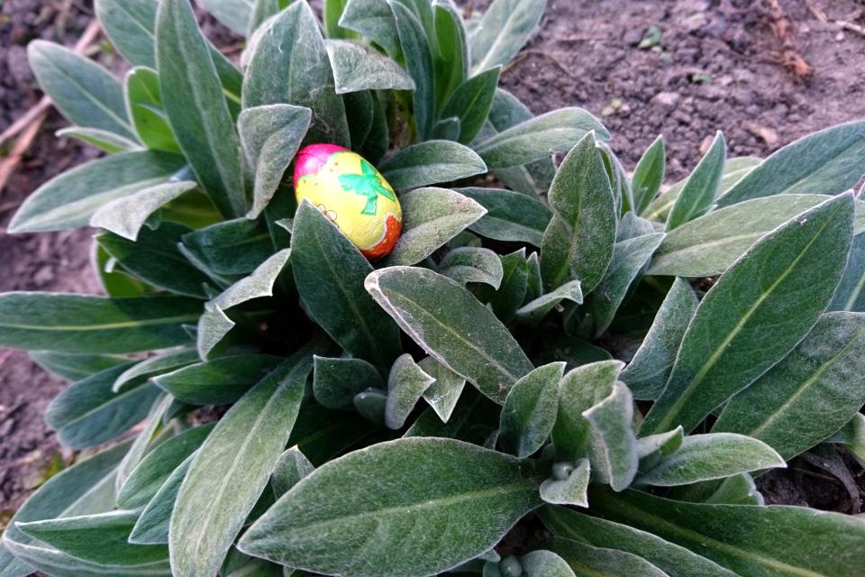 Пасхальное шоколадное яйцо в моей саду. 9 апр. 2020, мой сад, Дания